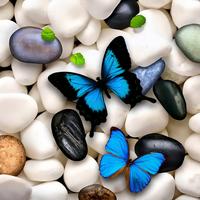 Sky Butterfly