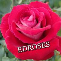 EDROSES