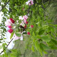 Зореслава