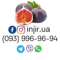 INJIR-UA